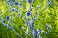 A growing plant in the field. The growing plant in the field close-up royalty free stock image