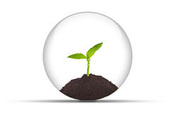 Growing plant in a glassy orb. An illustration of a growing young plant in a glassy orb . Isolated on a white background Royalty Free Stock Images