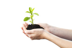 Growing plant in a hand Stock Images