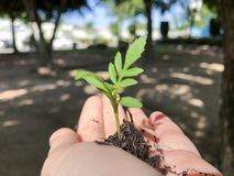 Growing a plant, handing and nurturing tree growing on fertile soil. Stock Photo