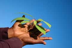 Growing plant in hands Stock Images
