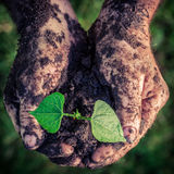 Growing plant in hands Stock Photos