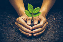 Growing a plant. Hands holding and nurturing tree growing on fertile soil  / nurturing baby plant / protect nature / Agriculture Royalty Free Stock Images