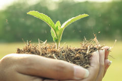 Growing plant on human hand. Were to plant a tree to add oxygen to the world royalty free stock photo