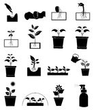 Growing plant icons set. In black Stock Photo