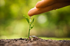 Growing plant, love nature Royalty Free Stock Photos