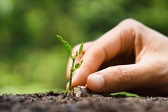 Growing plant, love nature Royalty Free Stock Images