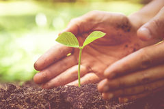 Growing plant, love nature Stock Photography