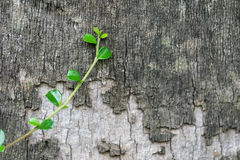 Growing plant near trees Royalty Free Stock Photo