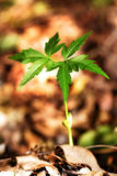 Growing plant-New life stock photo