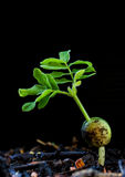 Growing plant-New life Stock Photos