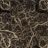 Growing plant roots. Plant is growing some roots in soil royalty free stock images