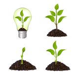 Growing plant seed  illustration Royalty Free Stock Image
