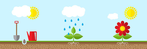 Growing plant in soil. Vector illustration Stock Photography
