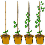 Growing Plant Stages Royalty Free Stock Images