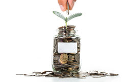 Growing plant step with coin money Stock Photo