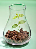Growing plant in a test tube. With green background Royalty Free Stock Photography