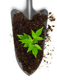 Growing plant on a trowel Stock Images