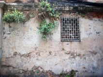 Grunge wall with barred window and growing plant. Plant with flower growing on the old wall near barred window background Royalty Free Stock Images