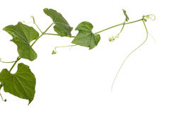 Growing plant on white Stock Image