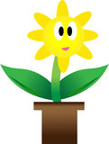 Growing plant with yellow flower in pot. Royalty Free Stock Photos