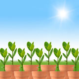 Growing plants. In pots on a sun shiny day stock illustration