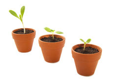 Free Growing Plants Royalty Free Stock Photo - 31331065