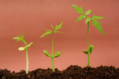 Growing plants Stock Photos