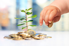 Growing plants and coins Royalty Free Stock Photography