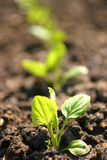 Growing plants Stock Image