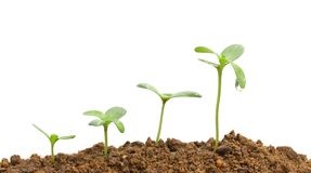 Growing plants Royalty Free Stock Photo