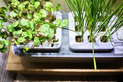 Growing plants at home. Special pots for growing herbs, plants, flowers at home. Details, close-up and macro photography//. Growing plants at home. Special pots stock image