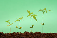 Growing plants-New life Stock Photography