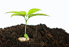 Growing plants from seed Stock Images