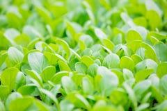 Growing plants of seedlings Stock Image