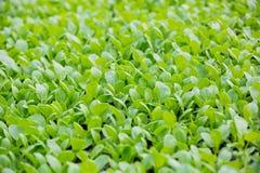 Growing plants of seedlings Royalty Free Stock Photo