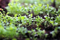 Growing Plants at Spring Stock Photography
