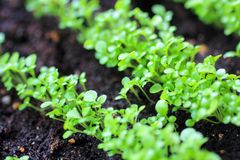 Growing Plants at Spring Royalty Free Stock Photos
