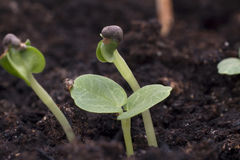 Growing plants Royalty Free Stock Photography