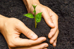 Growing plants Stock Images