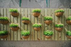 Growing plants on a wooden wall Stock Images