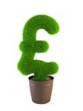 Growing pound symbol. Isolated on white background Royalty Free Stock Photography