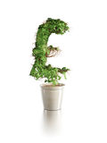 Growing pound tree Royalty Free Stock Image