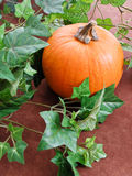 Growing A Pumpkin. A Pumpkin With Fake Ivy Vines On Brown Stock Photo