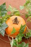 Growing Pumpkin Stock Photos