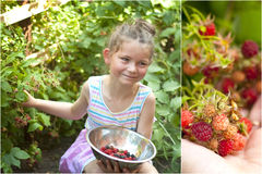 Growing raspberries with child. Fun activity with your child growing raspberries or any other berries in thew garden Royalty Free Stock Photography