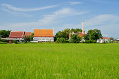 Growing rice and green grass field near temple Stock Photos