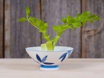 Growing root celery Stock Image