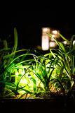 Growing safe II. Garden illuminated by night with a blurred building as backdrop Royalty Free Stock Images