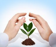 Growing in safety Royalty Free Stock Image